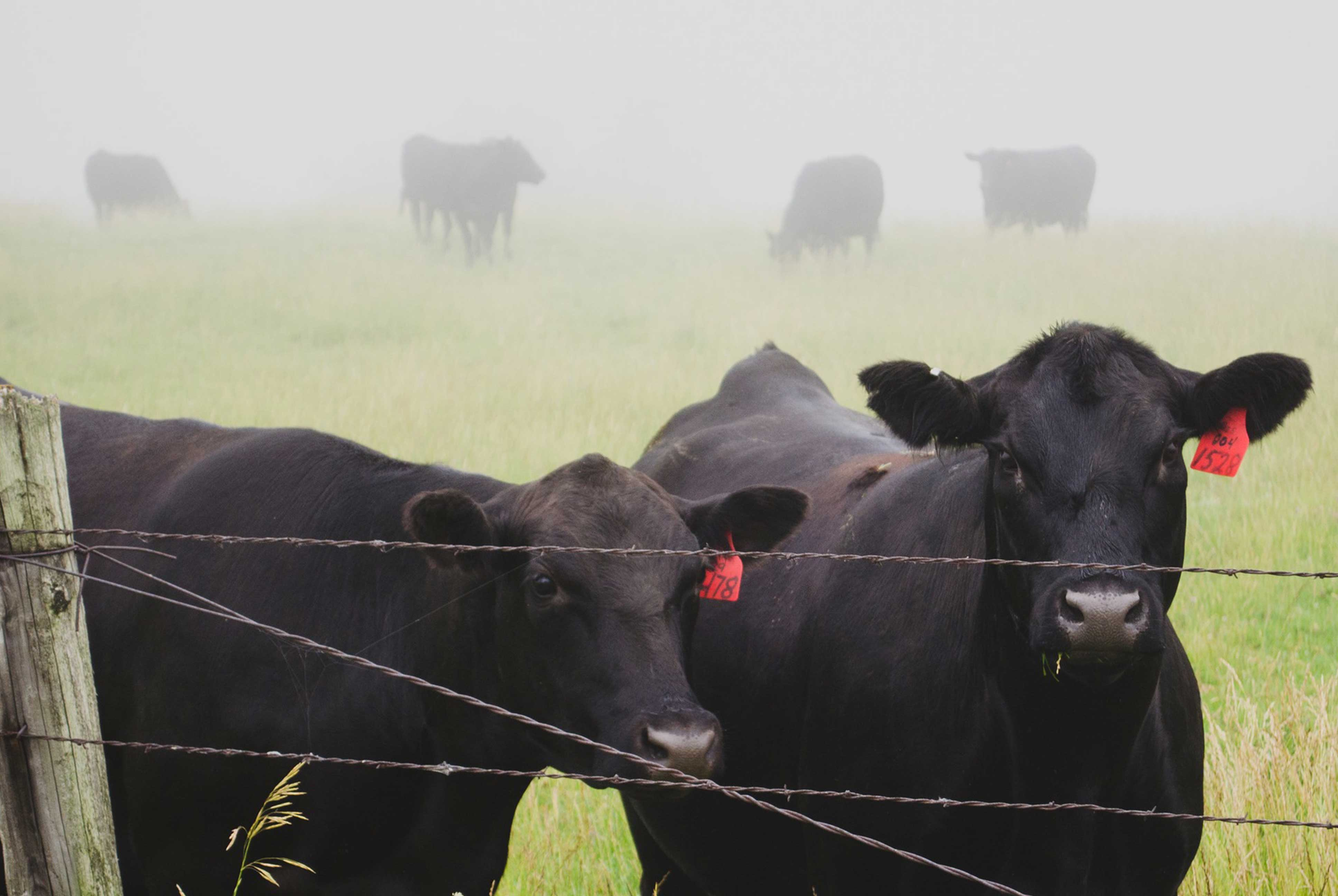 Dairy Grazing Conference