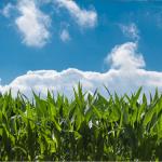 Organic Farming Conference