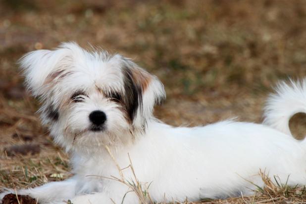 Ohio Dog Breeders Association Vendor Show – Mt  Hope Event Center